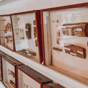 Museu do Eucalipto em Rio Claro | Portal Serra do Itaqueri