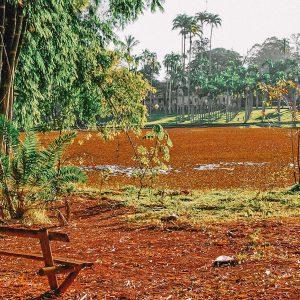 Floresta Edmundo Navarro de Andrade em Rio Claro | Portal Serra do Itaqueri
