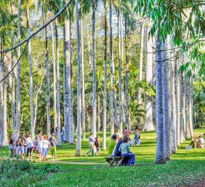 Floresta Estadual de Rio Claro | Portal Serra do Itaquerí