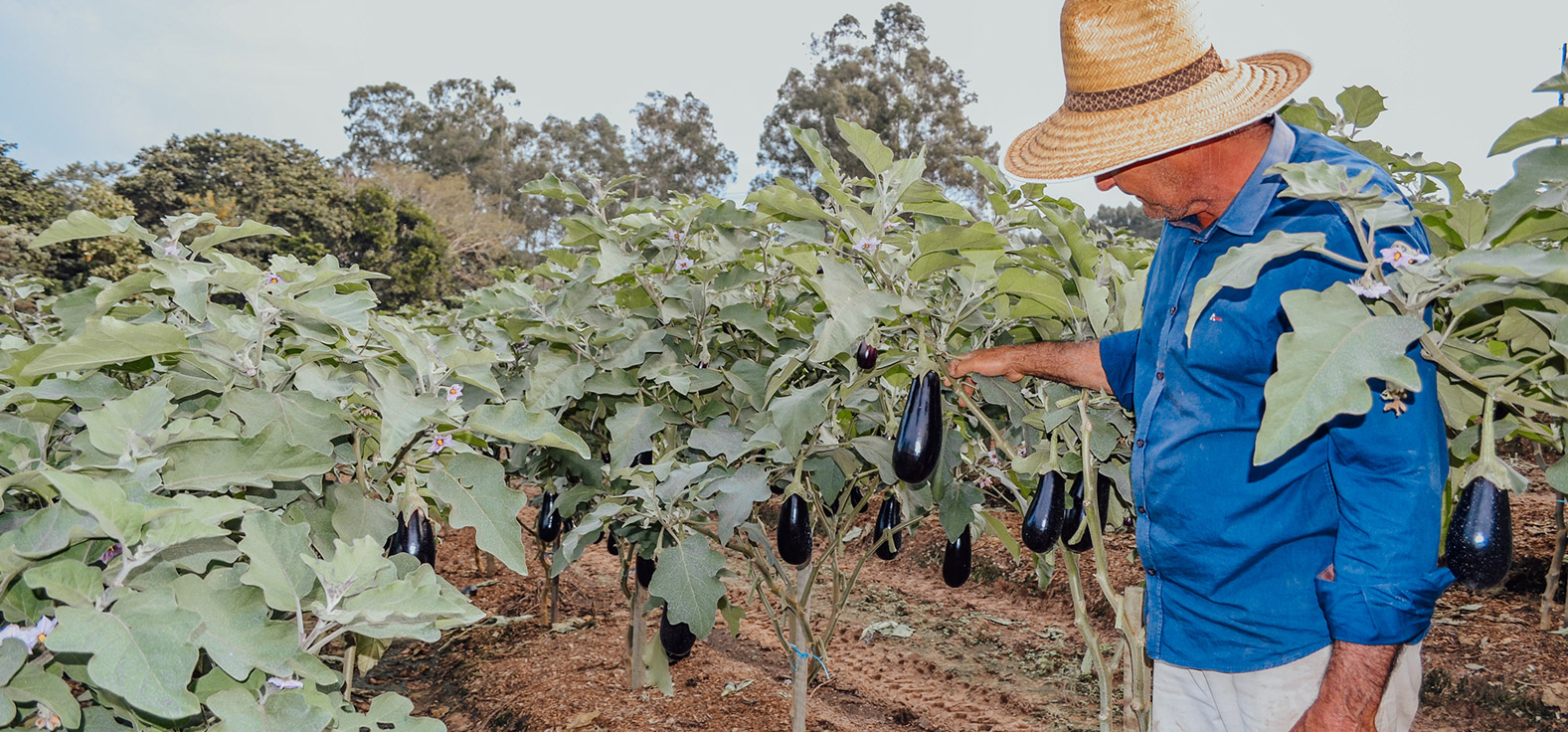 Agricultura Familiar em Corumbataí | Portal Serra do Itaquerí